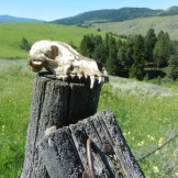 Life and death in the wild west