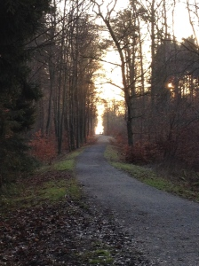 The sun rising over the trail.