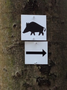 Why would anyone want to run toward a Wildschwein?