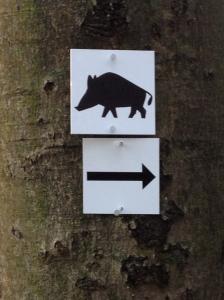 Why would anyone want to run toward a Wildschwein?